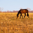 A horse in a field — Stock Photo #6061853