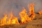 Fire on the nature — Stock Photo