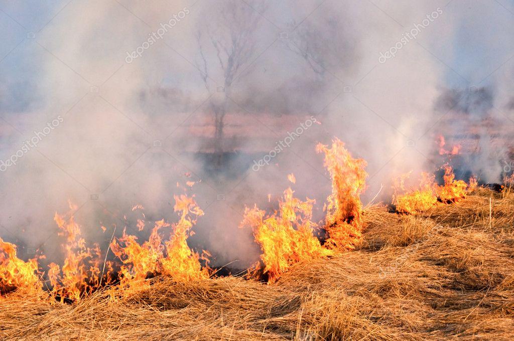 Картинки пожаров в природе