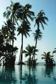 Coconut trees on the beach — Stock Photo