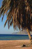 Landscape on beach — Stock Photo