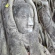 Buddha statue entwined by roots of spiritual tree at Wat Phra Ma — Stock Photo