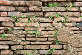 Old Brick Wall Grown With Grass — Stock Photo