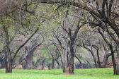 Antik kentin ayutthaya içinde güzel park — Stok fotoğraf