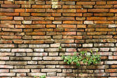 Old brick wall and new grass — Stock Photo
