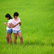 Royalty-Free Stock Photo: Two young sisters reading a book in paddy field