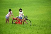 Two girls having fun on bike in paddy field — Stock Photo