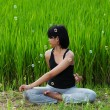 Girl practicing yoga in paddy field — Stock fotografie