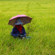 Stock Photo: Farmer working in rice field,rice selection