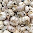 Stock Photo: Garlic - Allium Sativum