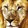 Close-up picture illustration of Large Lion face — Stock Photo