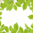 Green leaves frame — Stock Photo