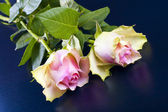 Decorative pink roses on a black background. — Stock Photo