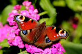 The butterfly on a flower — Stock Photo
