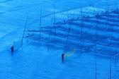 海藻農場の近くの漁師 — ストック写真