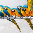 Stock Photo: Parrot birds