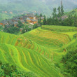 Stock Photo: Green rice terrace in china