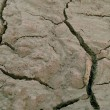 Cracked mud — Stockfoto