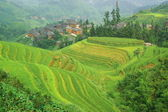 Green rice terrace in china — Stock Photo