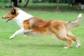 Dog running — Stock Photo