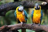Papağan kuş — Stok fotoğraf