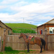 Horse near yard — Stock Photo