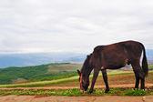âne dans le champ — Photo