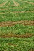 Mown grass — Stock Photo
