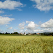 Rural landscape in brittany — Stock Photo #5935106