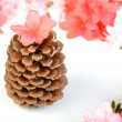 Pine Cone and Flowers — Stock Photo