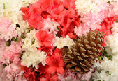 Azalea Flowers and Pine Cone — Stock Photo