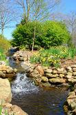 Creek and Daffodils — Stock Photo