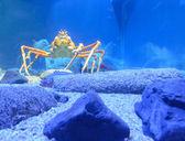 Deep sea crab — Stock Photo