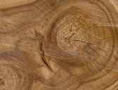 Texture of cut of tree — Stock Photo