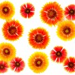 Clipart flowers red and yellow on white background — Stock Photo #5867954