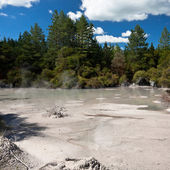 Geothermal mud pool, New Zealand — Stock Photo