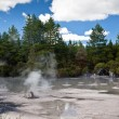 Steaming mud pool, New Zealand - Stock Photo