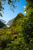 Rain forest and Fox Glacier, New Zealand — Stock Photo
