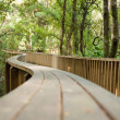 Forest pedestrian bridge - Stock Photo