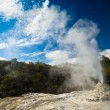 Lady Knox Geyser landscape in New Zealand — Stock Photo