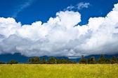 Nieuw-Zeeland platteland — Stockfoto