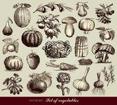 Set Vector de légumes — Vecteur