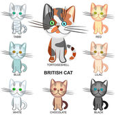 Vector set of the British Shorthair cats of various colors — Stock Vector