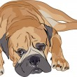 Stock Vector: Purebred Bullmastiff