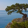 The tree on the rock — Stock Photo