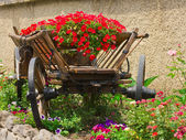 Flower bed in a peasant cart — Stock Photo