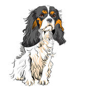 Vector dog Cavalier King Charles Spaniel — Stock Vector