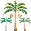 Stock Vector: Vector three date palm trees