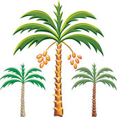 Vector three date palm trees — Stock Vector