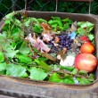 Household bio organic food waste - Stock Photo